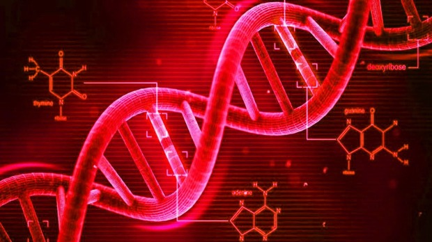 where within the cell are the dna instructions located