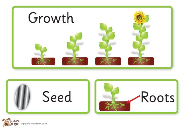 how to plant a seed instructions ks2