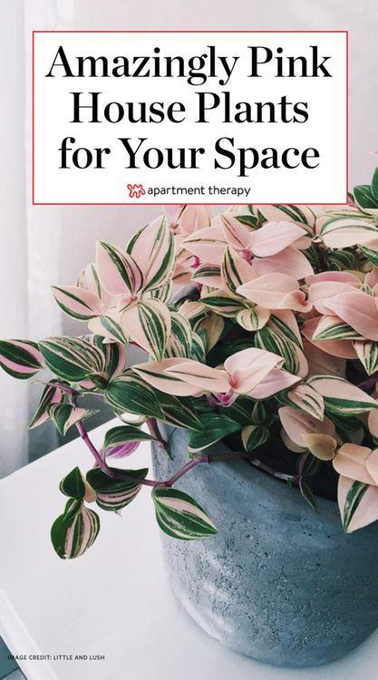 stromanthe plant care instructions